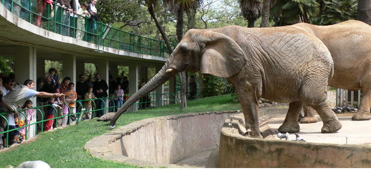 Barcelona zoo buy tickets online skip the line for Elephant barcellona
